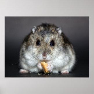 Poster Comer pequeno bonito do hamster