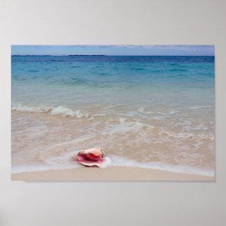 Pôster Conch na praia, Bahamas da rainha