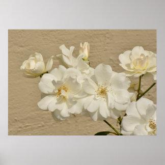 Poster Conjunto dos rosas brancos