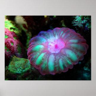 Pôster Coral submarino de incandescência