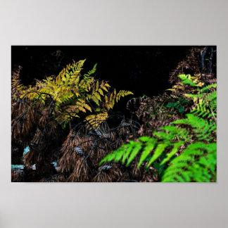 Pôster Cores do assoalho da floresta