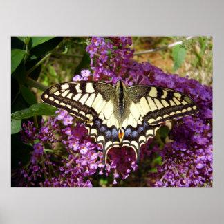 Poster da borboleta de Swallowtail