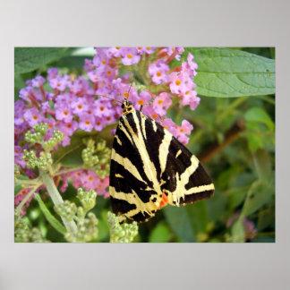 Poster da borboleta do tigre do jérsei