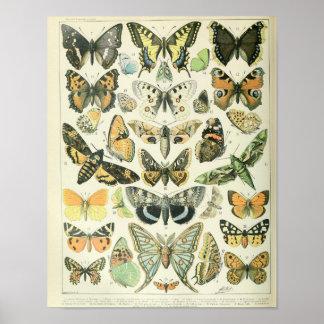 Poster da borboleta do vintage
