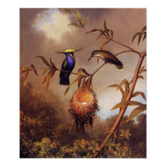 Poster da família do colibri pôster