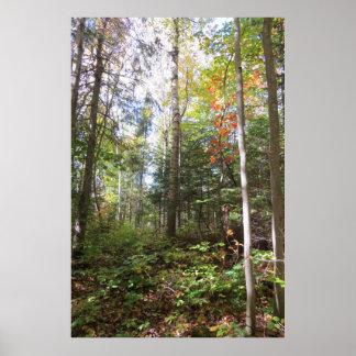 Poster da floresta do outono