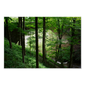 Poster da floresta do verde do arco da ponte