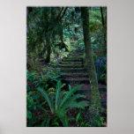 Poster da floresta húmida