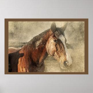 Poster da foto dos trabalhos de arte dos cavalos