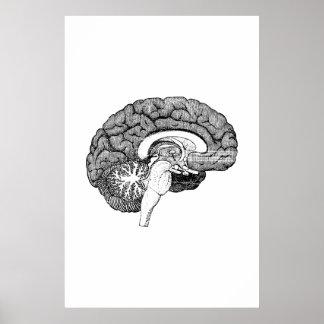 Poster da ilustração da anatomia do cérebro