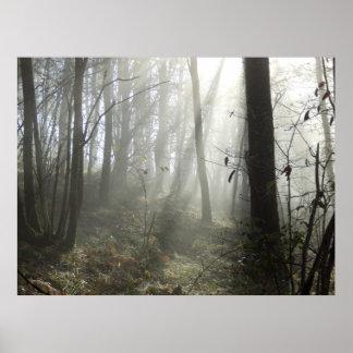 Poster da névoa da manhã da floresta