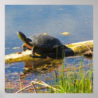 Poster da tartaruga
