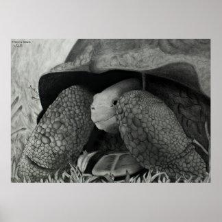 Poster da tartaruga de Galápagos