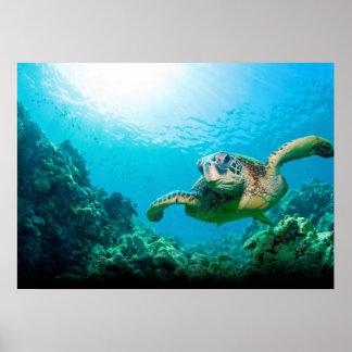 Poster da tartaruga de mar