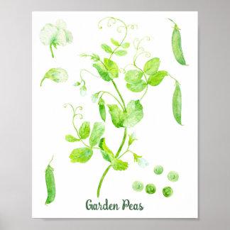 Poster das ervilhas de jardim da aguarela pôster