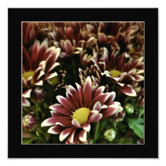 Poster das flores roxas e brancas arte de fotos