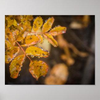 Poster das folhas de outono
