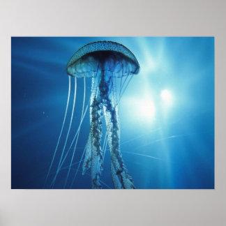 Poster das medusas