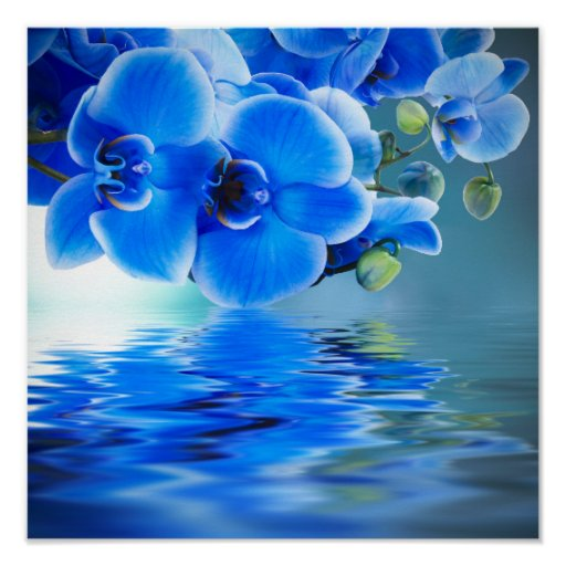 Las Orquideas Azules Jardineria Hello Foros Chismes