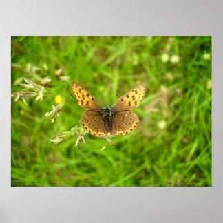 Poster de cobre afiado roxo da borboleta