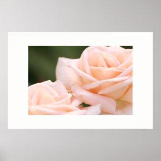 Poster de creme bonito dos rosas