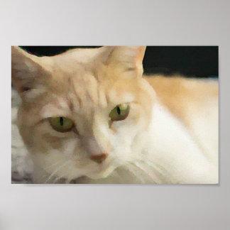 Poster de creme do valor do gato de gato malhado