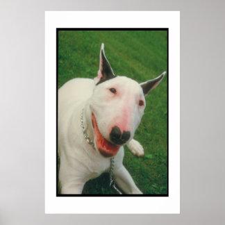 Poster de sorriso de bull terrier