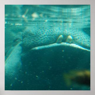 Poster de sorriso do hipopótamo