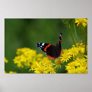 Poster do almirante vermelho borboleta