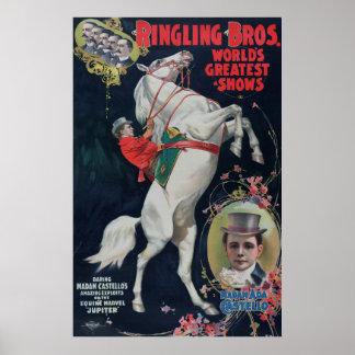 Poster do circo do cavalo branco de Ringling Bros