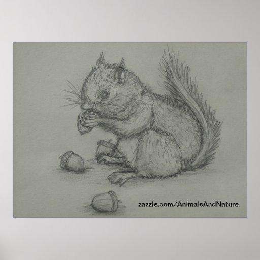 Poster do desenho de lápis do esquilo