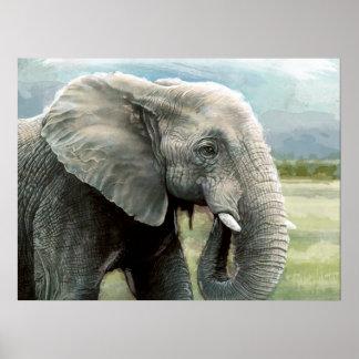 Poster do elefante africano