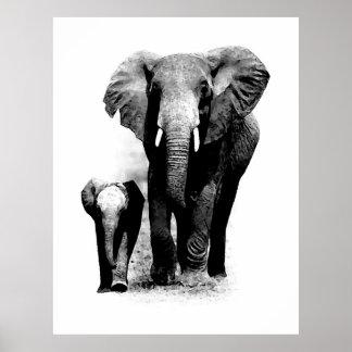 Poster do elefante de BW & do elefante do bebê