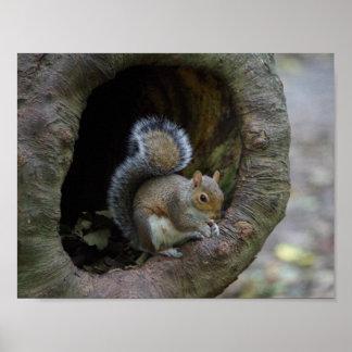 Poster do esquilo
