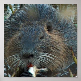 Encontre presentes das imagens do castor criativos for Castor habitat