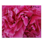 """""""Poster do impressão das peônias cor-de-rosa"""
