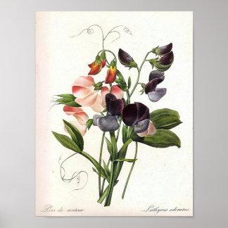 Poster do impressão floral do vintage