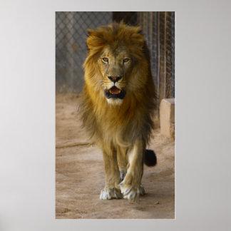 Poster do leão