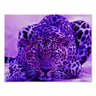 POSTER DO LEOPARDO