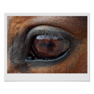 Poster do olho de Hores