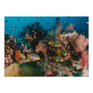 Poster do recife de corais