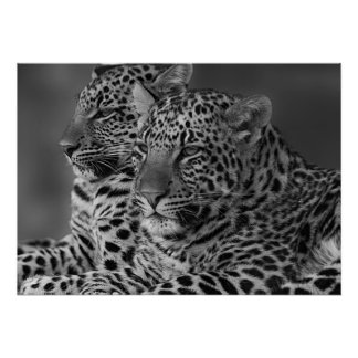 Poster do resíduo metálico do leopardo