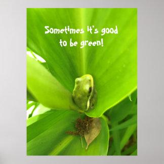 Poster do sapo verde