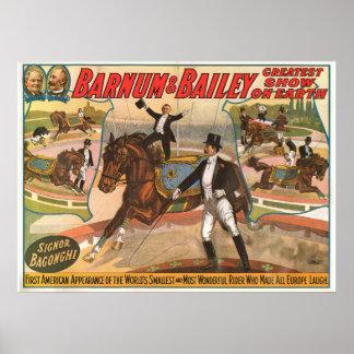 Poster do Signor Bagonghi Pequeno Cavaleiro Circo