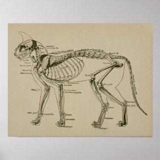 Poster Do vintage de esqueleto da anatomia do gato