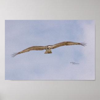 Poster do vôo do pássaro do Osprey