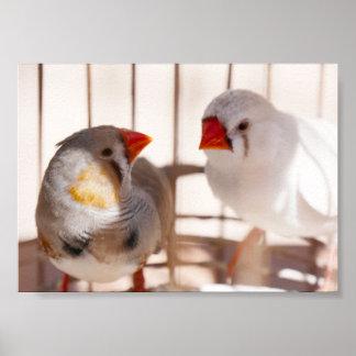 Poster Dois pássaros bonitos do passarinho na gaiola
