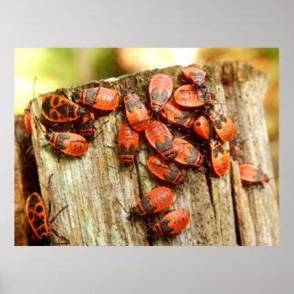 Poster dos Firebugs