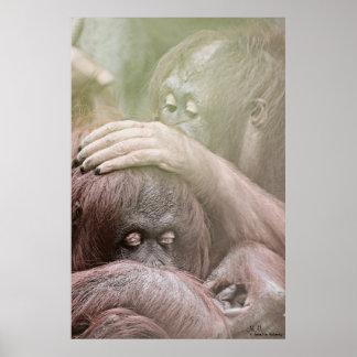 Poster dos orangotango