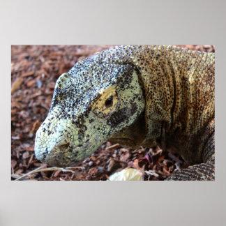 Poster Dragão de Komodo ascendente & pessoal